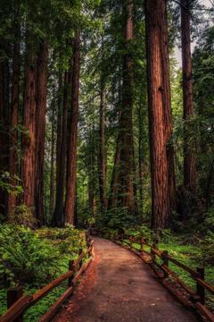 best California Redwoods image