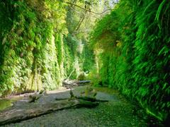 American Travel Journal Fern Canyon Trail