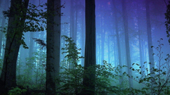 Trees Park Redwood National Sequoia Nature Screensavers For