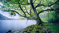 Rivers RIVERBANK TREE Natural Spots Scenery Scenic Europe Famous