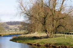 tree riverbank hd wallpapers