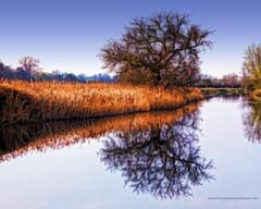 Reeds Oak Tree Riverbank Artistic Backgrounds Wallpapers
