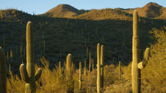 Trading Desk Time for Desert Time at Saguaro National Park