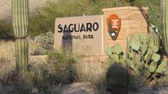 Record Numbers Visit Saguaro National Park Mirroring National