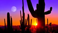 Third Sunset at Saguaro National Park near Tucson Arizona