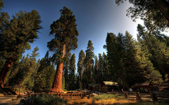 Sequoia National Park Wallpapers Top Ranked Sequoia National