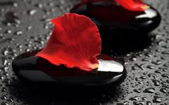petals stone water spa HD wallpapers