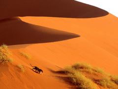 Crossing the Sand Dunes of Sossusvlei Park Namibia Africa