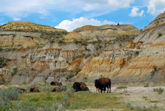 Check out Theodore Roosevelt National Park North Dakota