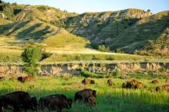Explore Theodore Roosevelt National Park