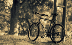 miscellaneous bike bicycle nature sports tree leaves blur backgrounds