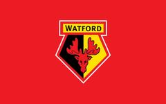 Feyenoord fans flood Watford s official Instagram account