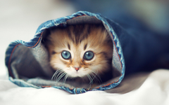 cute cat in a pants leg so cute