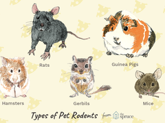 These are a lot of diffrent rodents hope you like it