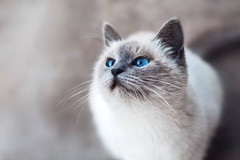 Cute Kitten and Cat Wallpapers To Brighten Your Day