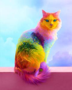 rainbow kit kat