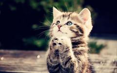 cat clap