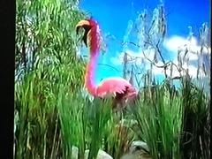 Elmo Flamingo