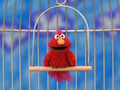 Elmo as a Pet Bird