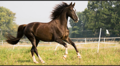 Dats a happy horse