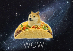 doge tuesday