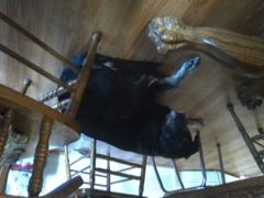 my dog bear upside down