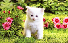 Helpful Picture Of Cats And Kittens White Wallpapers Wallpapers Pics