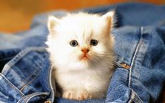 Kitten In Pants