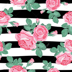 rose black and white stripe