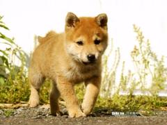 Lolas Second Puppy
