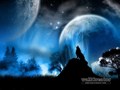 Lone Wolf 1280 1024 Wallpapers 1280x960 for your Desktop Mobile Tablet