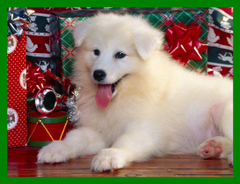 Shocking Christmas Spirit Cat And Dog Wallpapers Pics For Cute Merry