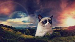 im a grumpy cat