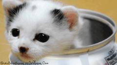 Cute Cat in a Diet Coke Can