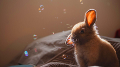 Bunny Soap Bubbles