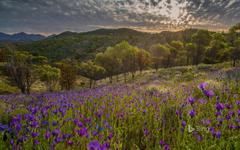 Ikara Flinders Ranges National Park South Australia