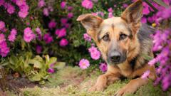 HD wallpaper language summer flowers dog small garden red