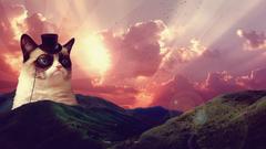 Grumpy Cat wallpapers wallpapers