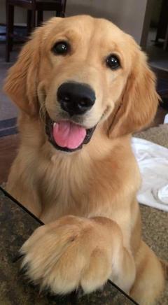 my cute dog milly