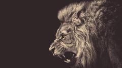 king loin