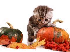 Maggie Cross on Autumn Cats