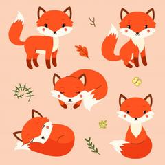 broad foxy