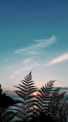 Skylight nature